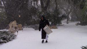 Photos of rare snow at Mepkin