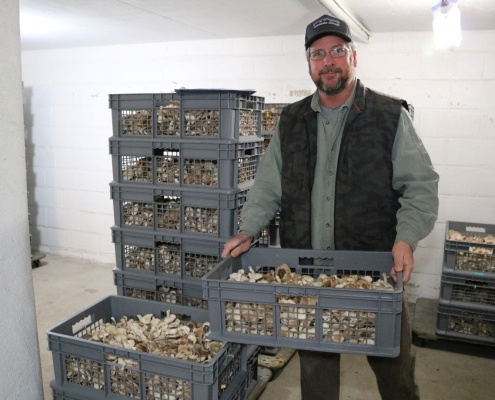 "Mepkin Mushrooms Part of Lowcountry ""Farm to Table"" Lifestyle"