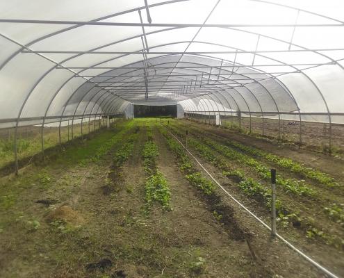 Agricultural Institute Progresses